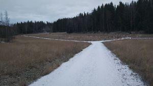 Tomt med högt gräs och gångar på vintern.