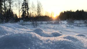 Aurinko paistaa lumikinoksiin pakkassäällä.