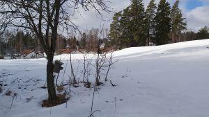 Snöig tomt med småhus i bakgrunden.