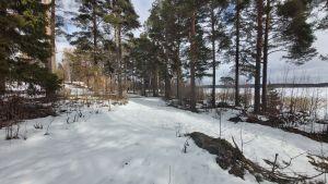 Snöigt landskap med strandlinje.