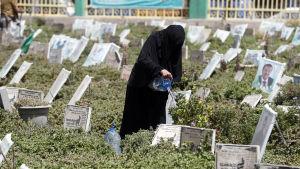 En krigsänka vattnar en grav vid en gravgård för stupade rebeller i huvudstaden Sana.