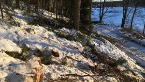 Träd som har fällts invid en väg.
