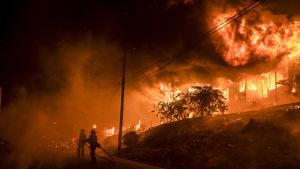 Minst sju människor har omkommit och tusentals har flytt från sina hem i norra Kalifornien