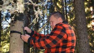 Tommy Holmblad ute i skogen i Kvevlax och kontrollerar sin viltkamera.