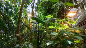 Värmelampor som lyser i växthuset.
