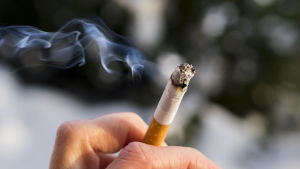 En tänd tobak som hålls fast mellan två finger