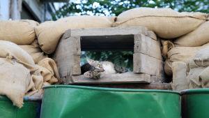 En katt njuter av livet på barrikaden som delar Nicosia.