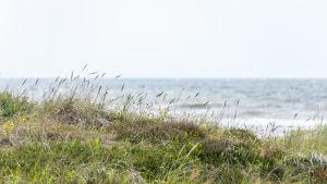 Strandgräs och hav.
