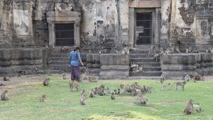 Stora mängder apor håller ständigt till kring två nästa tusen år gamla ruiner.