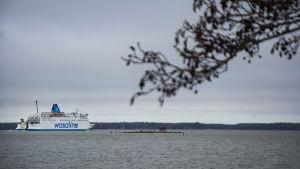 I förgrunden syns en trädgren. I bakgrunden syns Wasa Express på väg från vasa till Umeå.