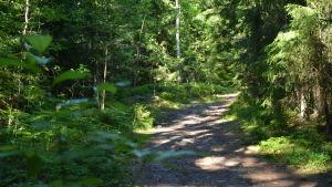 En bred stig med grönskande träd omkring.