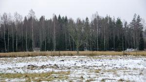 En åker. Mitt på åkern står ett kalt träd. I bakgrunden syns skog. Det är lite snö på marken.