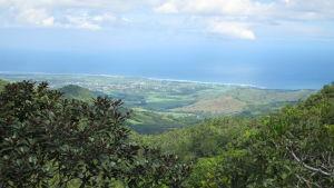Vy över grönska på Mauritius och blått hav i bakgrunden