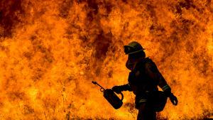 14 000 brandbekämpare deltar i arbetet för att släcka åtta större markbränder i norra Kalifornien