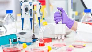 Ett laboratorium fyllt med vätskor och provrör. En hand håller i en stor flerpipig pipett och droppar ner vätska i små provrör.