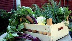 Grönsaker i en trälåda.