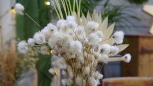 Ett knippe torkad tuvull, en vild växt som ser ut som bomull.