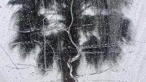 Regndroppar på ett fönster med ett palm i bakgrunden.