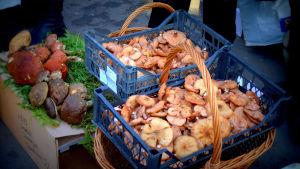 Sieniä myytävänä Venäjällä