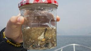 Microplast i marinmiljö.