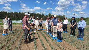 Tutkijoita pellolla tilan isännän kanssa tutustumassa kaali- ja härkäpapuviljelmiin.