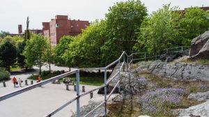 Kallio, jonka reunalla aita ja maassa kukkii violetteja kukkia. Alhaalla näkyy katu, puita, ihmisiä ja rakennuksia.