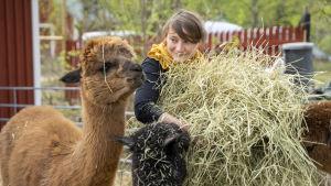 Annina Vartio tillsammans med alpackan Came.