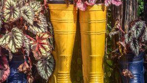 Återanvänding av färggranna gummistövlar som blomkrukor.