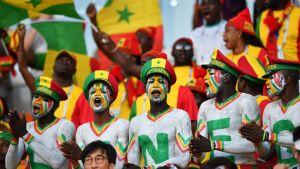 Senegalsupporters på läktaren vid VM i Ryssland.