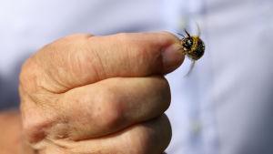 Förhoppningen är att de nya lagarna ska göra livet lättare för humlor och andra insekter