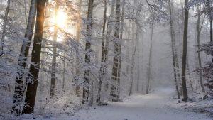 Talvinen metsätie