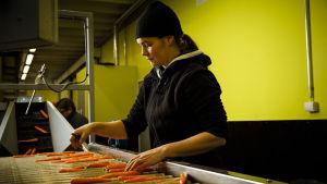 Rosmarie Finne sorterar morötter