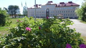 Raseborgs stadshus i Ekenäs med en blommande vresrosbuske i förgrunden.