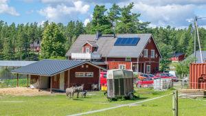 ett rött hus med hage framför. I hagen finns två åsnor och några getter.