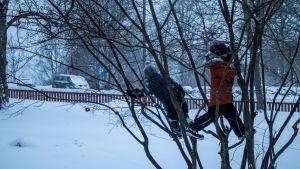 Barn klättrar i ett träd.