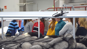 Skolklass besöker skinnutställning i Nykarleby.