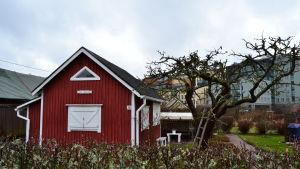 En kolonistuga med kontorsbyggnader i bakgrunden. På gården står en stege lutad mot ett stort trädd.