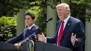 Japans premiärminister Shinzo Abe och Donald Trump under presskonferensen i Vita husets rosenträdgård.