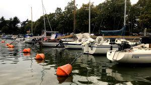 Små segelbåtar med fällda segel som står i hamnen.