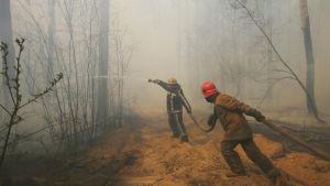 Skogsbrand nära byn Rabovka  i Ukraina i närheten av kärnkraftverket i Tjernobyl.