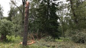 Träd föll i en hundpark i Joensuu