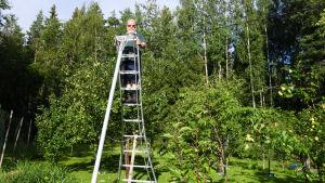En man står uppe på en aluminiumstege i en trädgård.