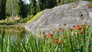 Orangea blommor med damm och berg i bakgrunden.