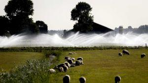 konstbevattning i Nederländerna