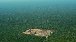 En bild tagen den 22 september 2017 på ett kalhygge i västra Amazonas.
