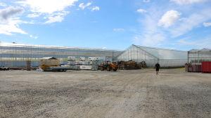 Ett stort växthus i Närpes. Framför växthuset står en truck och flera vattencontainers.