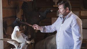 Man i vit skjorta dammar av uppstoppad mås med en stor fjäder.