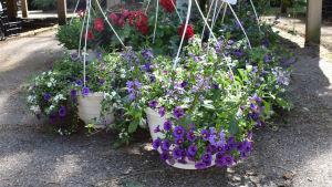 Amplar i en trädgårdsaffär