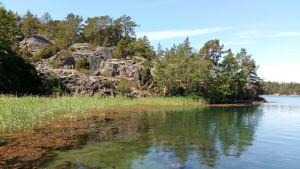 En havsvik med klippor. I det klara vattnet syns vass och blåstång.