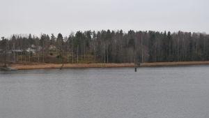 En strandlinje med vass i Gammelboda där Raseborgs stad planerar en småbåtshamn.